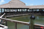 Fish feeding area at Islamorada Restaurant