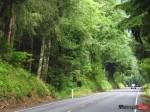 Oregon PCH Car