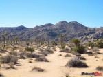 IMG_2309 desert