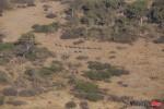 Gwen Aerial elephant herd_MG_0433