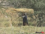 woman carring sticksIMG_1089