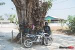 road-built-around-bodhi-tree-2