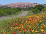 enchanted-rock-and-wildflowers-credit-steve-rawls