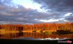 LAKE RED TREES