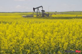 Canola Oil Well