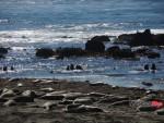 Sea Lions Lying on the Beach