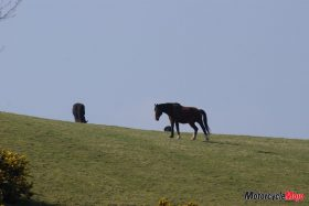 A Wild Horse on the Isle of Man