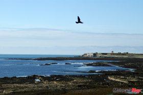 A Bird Soaring Over The Shore