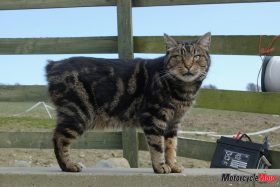 Finding a Cat in Manx