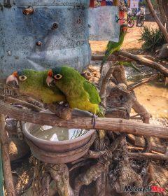 Meeting Parrots in El Salvador