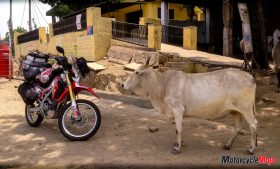 A Cow Observing A Motorcycle in India