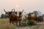 finding-bulls-in-nebraska