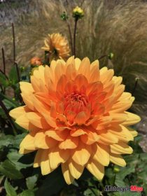 Blooming Flowers in California