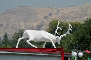 Deer Statue in Idaho