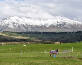 newzealandfeatureimage