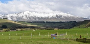 newzealandfeatureimage