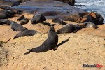 sealions-in-new-zealand