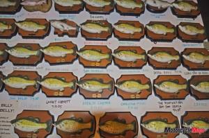 Lots of Fish in Arkansas