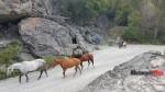 Bluff Lake horse (2)