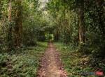 13 Cuc Phuong National Park (JPG 7.4MB)